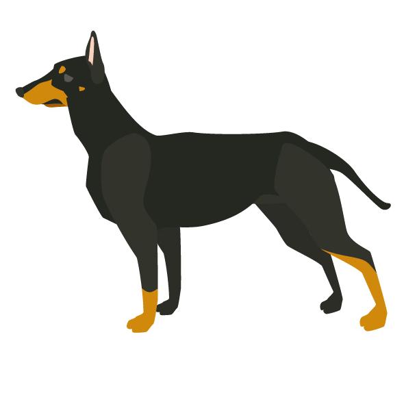 ドーベルマン・ボクサー等大型犬