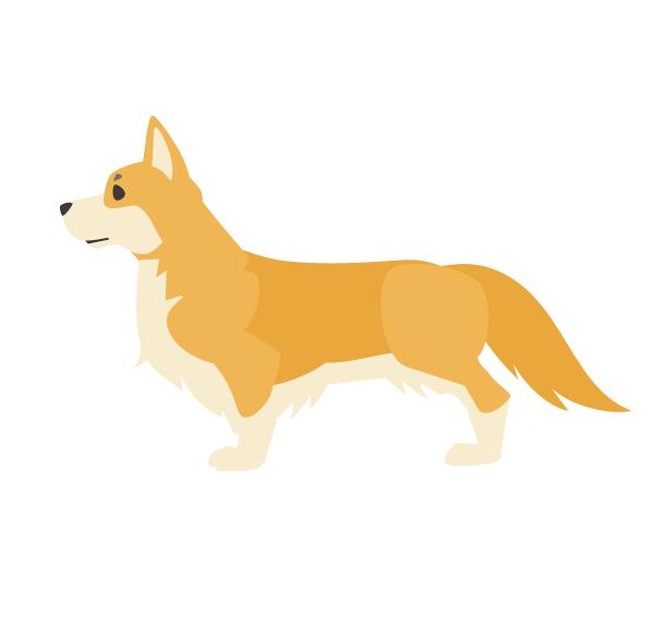 柴犬・コーギー・ダックスフンド・ビーグル等中型犬