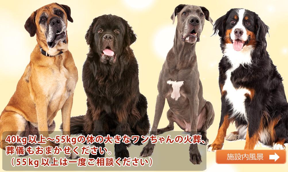 大型犬のペット葬儀、火葬もおまかせください